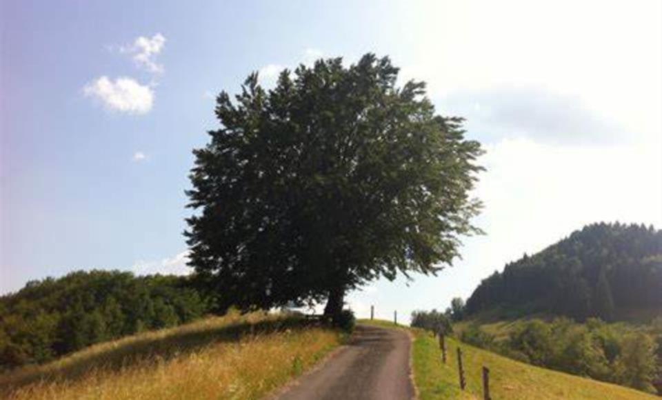 Ex Romitorio del Monte Castellano